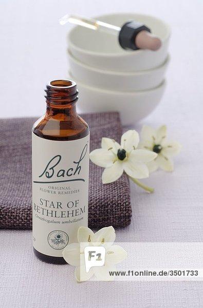 Bach-Blütentherapie mit Milchstern