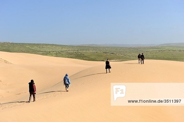dunes around Tamri on Atlantic Coast  between Agadir and Essaouira  Morocco  North Africa