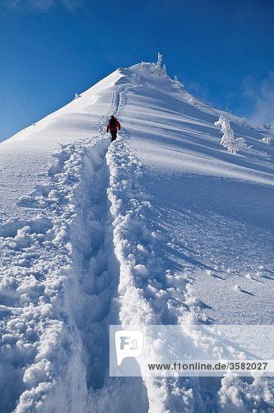 Person Climbs through deep powder snow towars summit of Jenner  Berchtesgaden national park  Bavaria  Germany