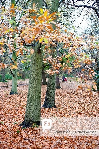 Kew Gardens at autumn in London  United Kingdom  Great Britain  Europe