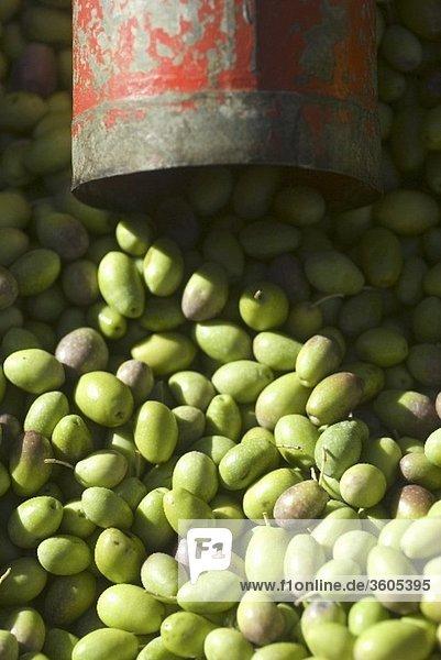 Viele grüne Oliven