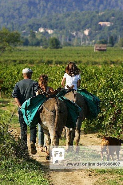 Provence - Europa - 83 Var - Frankreich - Hund - La Roquebrussanne - PACA