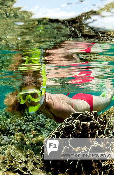 Schnorchler am Korallenriff.