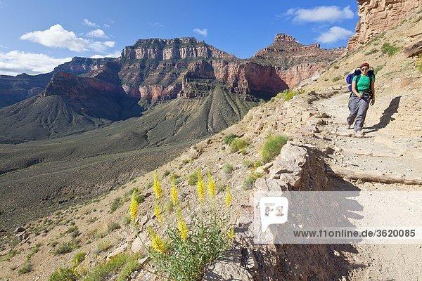 South Kaibab Trail  Grand Canyon  Arizona  USA