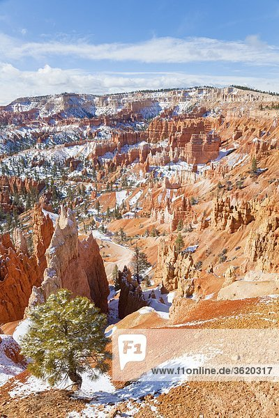 Landschaft im Bryce Canyon Nationalpark,  Utah,  USA