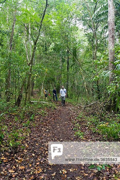 Guatemala  Peten  El Mirador  path through the jungle