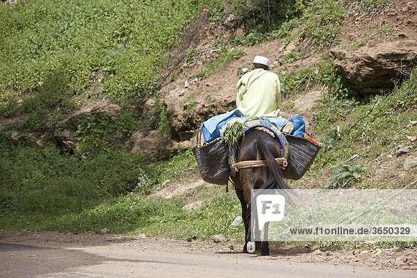 Mann reitet auf beladenem Pferd  Marokko  Afrika