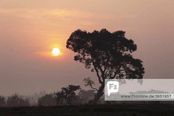Sonnenaufgang  Coorg  Karnataka  Südindien  Indien  Südasien  Asien