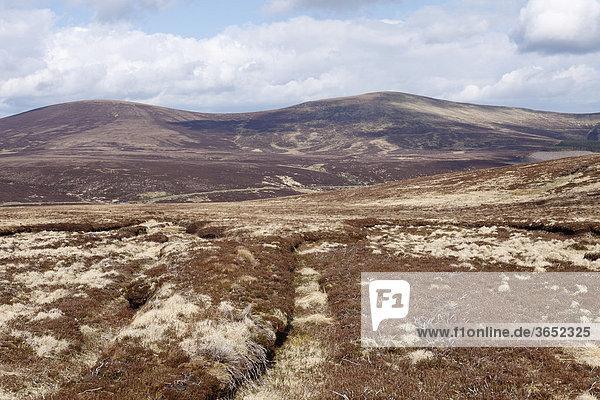 Moor im Frühling  Nationalpark Wicklow Mountains  County Wicklow  Irland  Britische Inseln  Europa
