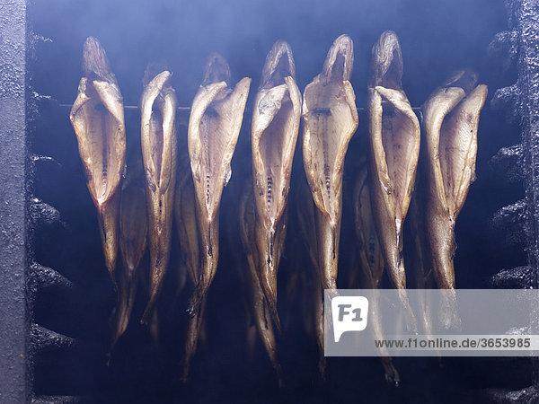 Aufgespießte Forellen in einem Räucherofen am Brocken im Harz  Sachsen-Anhalt  Deutschland  Europa Aufgespießte Forellen in einem Räucherofen am Brocken im Harz, Sachsen-Anhalt, Deutschland, Europa