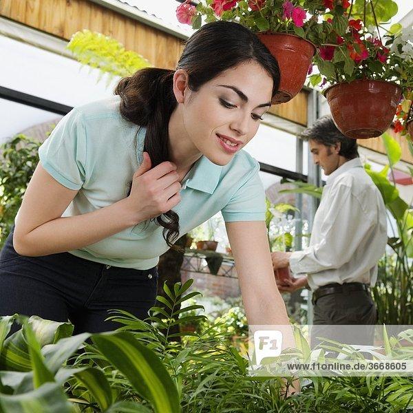 Pflanze auswählen Kunde Treibhaus