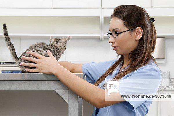 Weibliche Tierarzt untersucht eine Katze