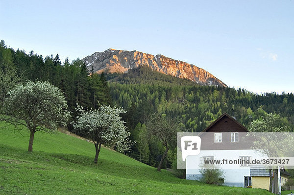 Blooming fruit trees and a farmhouse with a mountain in the last colour of the sunset Lower Austria
