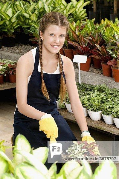 Frau Pflanze Blumentopf anpflanzen