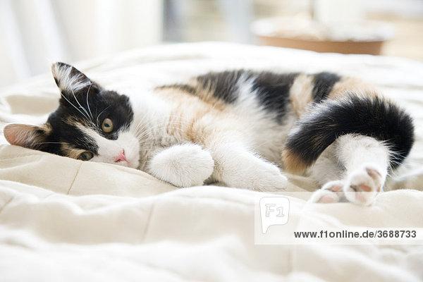 kitten relaxing on bed