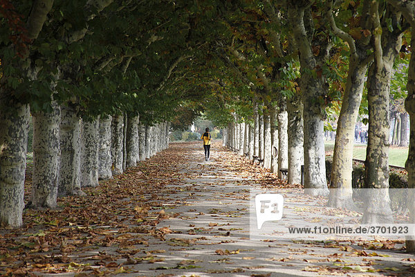 Ein Jogger alleine auf einer Allee in Frankfurt am Main  Hessen  Deutschland  Europa