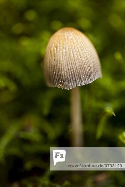 Portrait eines kleinen Pilzes