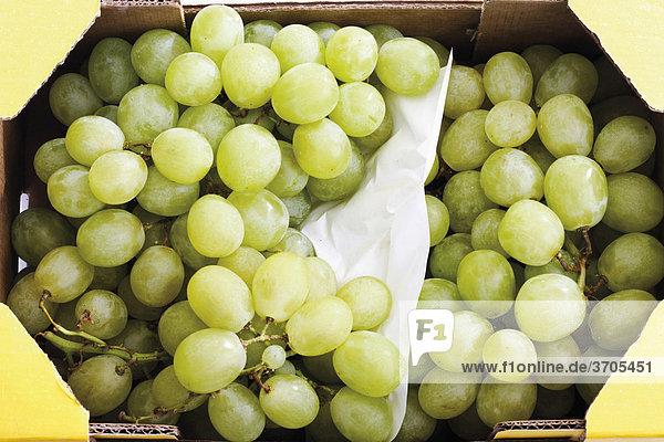 Grüne Weintrauben im Transportkarton