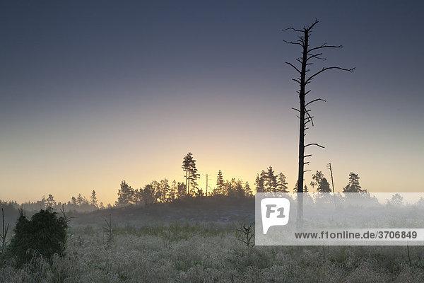 Landschaft mit kahlem Baum in Sotenäs  Schweden