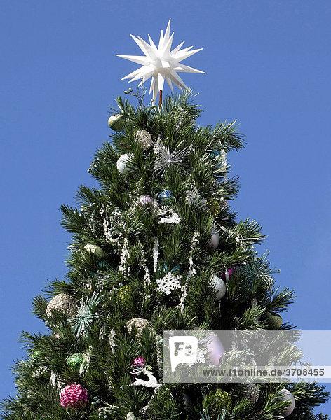 Weihnachtsbaum bei blauem Himmel