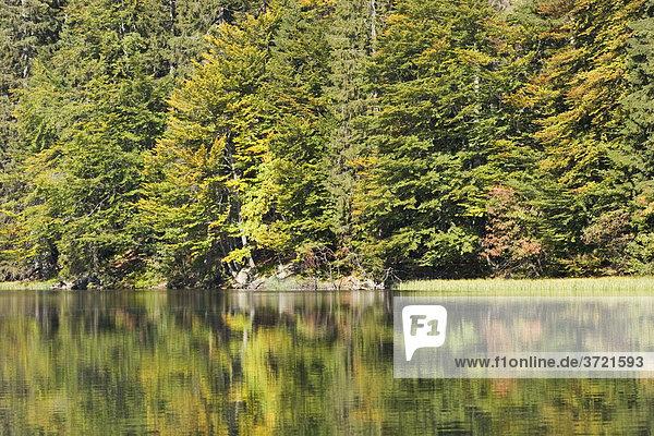 Rachelsee lake National Park Bavarian Forest Germany