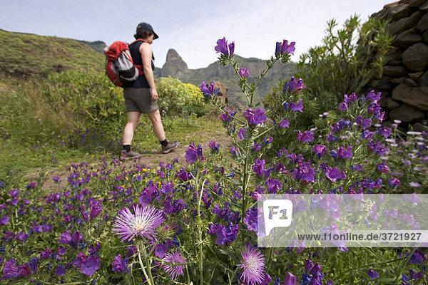 Wanderin hinter Milchdistel und Natternkopf - Benchijigua La Gomera Kanaren