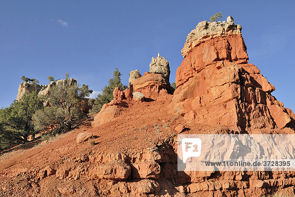 Felsformation im Red Canyon  Dixie National Forest  Utah  USA