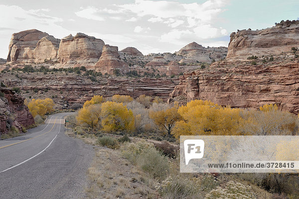 Am Highway 12 im Tal des Escalante River  Utah  USA