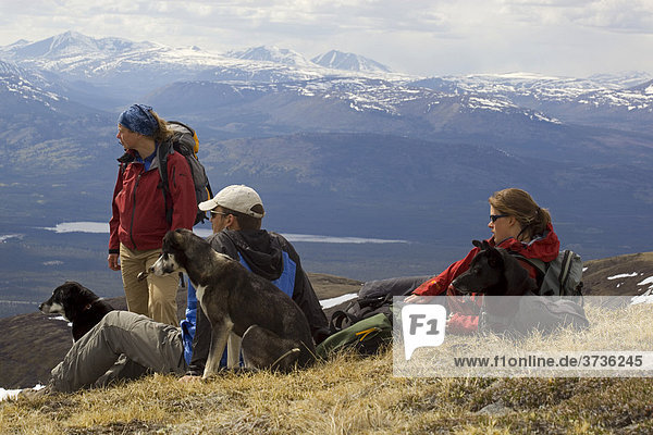 Group of hikers and dogs resting  enjoying the panorama  Mt. Lorne  Pacific Coast Ranges behind  Yukon Territory  Canada  North America