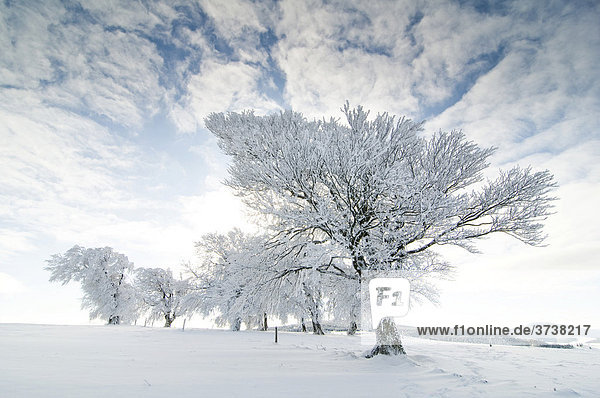 Snow-covered trees  clouded blue sky and sun  Black Forest  Baden-Wuerttemberg  Germany