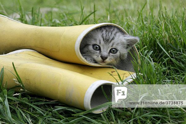 Kätzchen in einem Gummistiefel