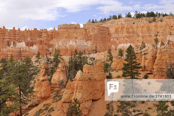 Kalksteinformationen  sog. Hoodoos  Bryce Canyon Nationalpark  Utah  USA