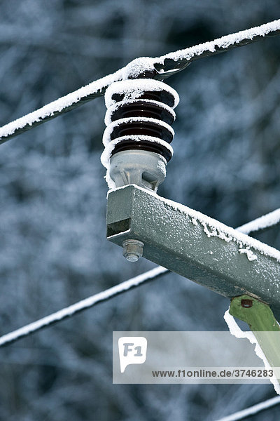 Iced over power pole in a forest,  Bavaria,  Germany,  Europe