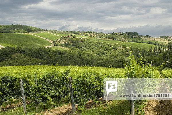 Typische Landschaft mit Weinbergen  Chianti  Toskana  Italien