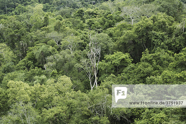Tropical reinforest  Iguazu National Park  Brazil/Argentina