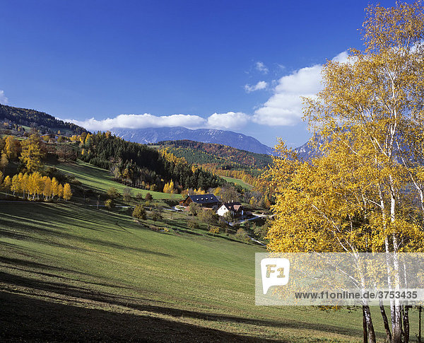 Herbstliche Birken ein Bauernhof und hinten die Rax  Niederösterreich  Österreich