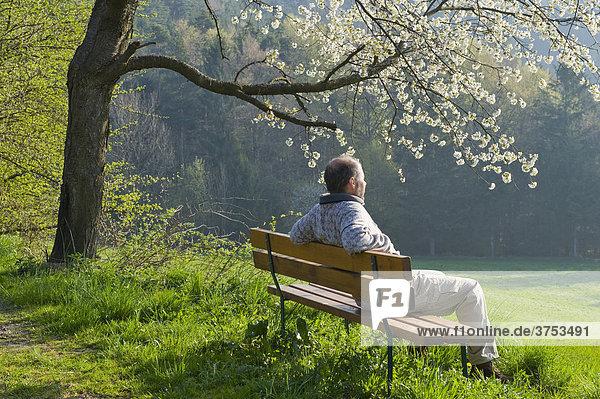 Mann sitzt auf Bank unter blühendem Obstbaum  Region Bucklige Welt  Niederösterreich  Österreich  Europa