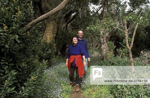 Wanderer in Lorbeer-Schneeheide-Wald  El Hierro  Kanarische Inseln  Spanien