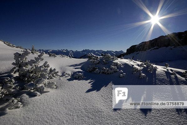 Schneelandschaft mit Allgäuer Alpen  Kleinwalsertal  Vorarlberg  Östereich