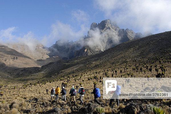 Trekkinggruppe auf Pfad in Gebirgslandschaft mit endemischem Riesen-Greiskraut (Senecio keniodendron) vor Gipfel Batian (5199 m) Mount Kenia Nationalpark Kenia