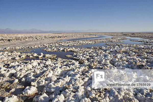 Salzformationen bedecken den Boden des Reserva Nacional los Flamencos in der Salar de Atacama  RegiÛn de Antofagasta  Chile  Südamerika
