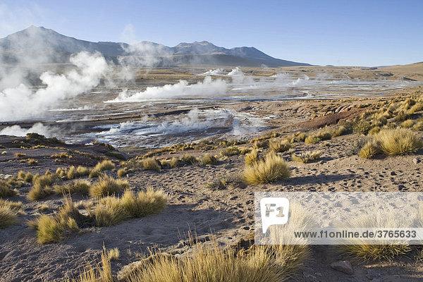 Bei Sonnenaufgang dampfen die heißen Quellen am stärksten  Tatio Geysire  RegiÛn de Antofagasta  Chile  Südamerika