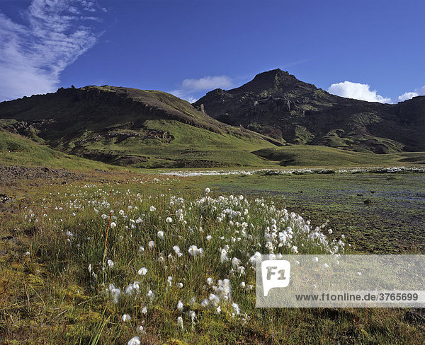 Wollgras (Eriophorum) und hinten der Berg Horn  Snaefellsnes Halbinsel  Island