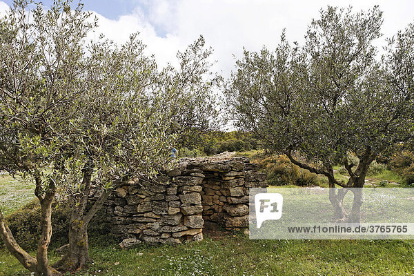 Olive grove and stone hut at the Phourni Necropolis (ancient Minoan cemetery) near Archanes  Crete  Greece  Europe