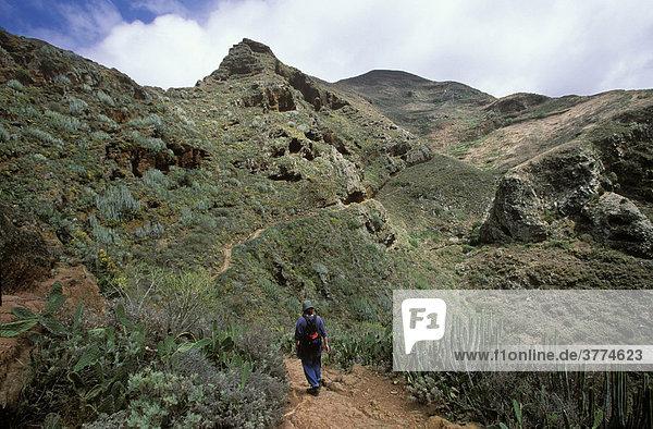 Wanderweg in Anaga-Gebirge  Teneriffa  Kanarische Inseln  Spanien