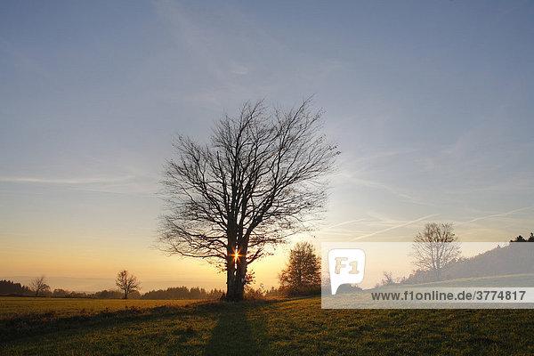 Morgenstimmung auf Platzer Kuppe (Gde. Geroda)  Schwarze Berge  Rhön  Unterfranken  Bayern  Deutschland