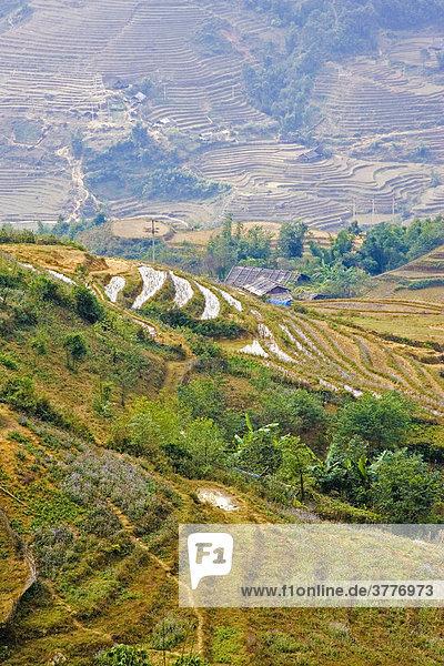 Reisterrassen im hohen Norden von Vietnam  Asien