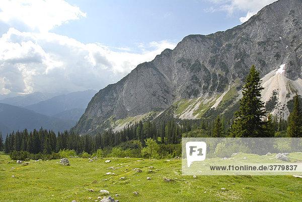 Alpine meadow with mountain forest Gehrenspitze Tyrol Austria