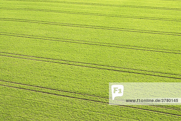 Tracks of a tractor in winter wheat fields