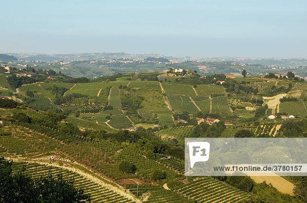 Near Cisterna d¥ Asti at the Roero Piedmont Italy in the vineyards